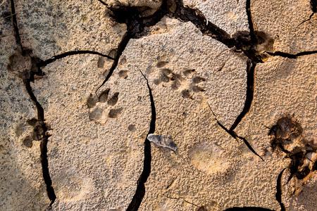 깨진 된 땅에서 개 발자국입니다. 마른 땅에서 동물 발자국. 야외 낮 시간에. 자연 배경입니다. 비 네트 스타일.