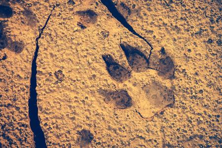 깨진 된 땅에서 개 발자국입니다. 마른 땅에서 동물 발자국. 낮에는 야외 활동. 자연 배경입니다. 비 네트 스타일. 빈티지 효과 톤입니다. 스톡 콘텐츠