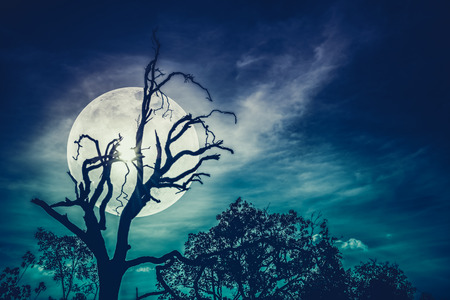 Night landscape of sky with bright super moon behind silhouette of dead tree, serenity nature. Outdoors at nighttime. Cross process. The moon taken with my own camera. Stock Photo
