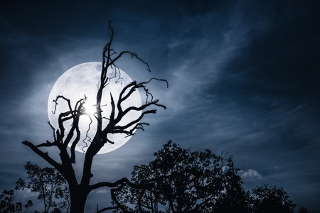 Night landscape of sky with bright super moon behind silhouette of dead tree, serenity nature. Outdoors at nighttime.The moon taken with my own camera. Stock Photo