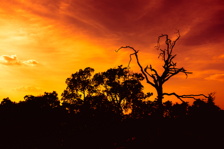 Fantastic landscape of orange sky with sun beams above silhouette of trees at sunset, serenity nature. Dramatic colorful scenery, beautiful background.