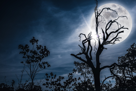 Night landscape of sky and super moon with bright moonlight behind silhouette of dead tree, serenity nature. Outdoors at nighttime.The moon taken with my own camera.