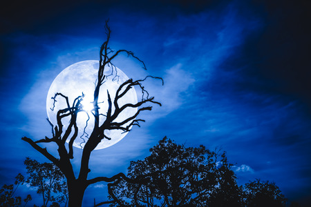Night landscape of blue sky with bright super moon behind silhouette of dead tree, serenity nature. Outdoors at nighttime.The moon taken with my own camera.
