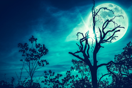 Night landscape of sky and super moon with bright moonlight behind silhouette of dead tree, serenity nature. Outdoors at nighttime. Cross process. The moon taken with my own camera. Stock Photo
