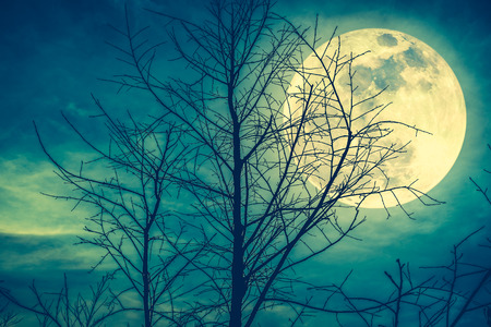 Night landscape of sky and super moon with moonlight behind silhouette of dead tree, serenity nature background. Outdoor at nighttime. Cross process and vintage tone. The moon taken with my own camera.