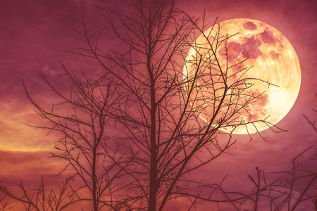 Night landscape of sky and super moon with moonlight behind silhouette of dead tree, serenity nature background. Outdoor at nighttime. The moon taken with my own camera. Stock Photo