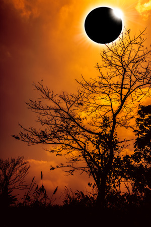 Amazing scientific natural phenomenon. Diamond ring, prominence and internal corona. Total solar eclipse glowing on orange sky above silhouette of trees, serenity nature. Abstract fantastic background