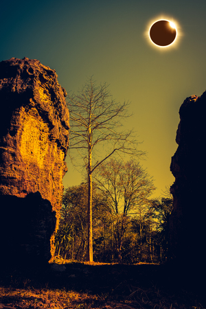 Scientific natural phenomenon. Diamond ring, prominence and internal corona. Total solar eclipse glowing on blue sky above silhouette of dead trees and boulder in forest, serenity nature background.