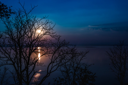 Silhouettes of dry tree against sky and cloud over tranquil sea. Nighttime with moonlight and reflection in water. Full moon behind trees, beautiful nature in the evening. Stock Photo