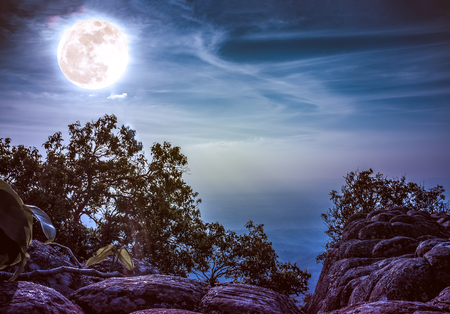 Silhouette of rock and trees against blue sky with bright full moon above wilderness area in forest. Serenity nature background. Outdoor at nighttime. Vintage effect tone. The moon taken with my own camera.
