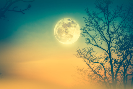 Night landscape of colorful sky, foggy is swinging between silhouette of dry tree and full moon. Serenity nature background. Outdoor at nighttime. Cross process. The moon taken with my own camera.