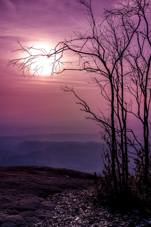 Night landscape of sky and super moon with bright moonlight behind silhouette of dead tree, serenity nature background. Outdoors at nighttime.