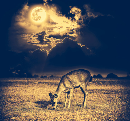 Beautiful deer graze among sky with bright full moon and dark cloudy in forest. Animals in natural environment, serenity background.  Vignette and vintage effect tone. The moon taken with my camera.