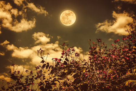 Colorful flowers blooming against night sky and clouds with bright full moon. Serenity nature background, outdoor at nighttime. Sepia tone. The moon taken with my own camera.