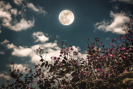 Colorful flowers blooming against night sky and clouds with bright full moon. Serenity nature background, outdoor at nighttime. The moon taken with my own camera.