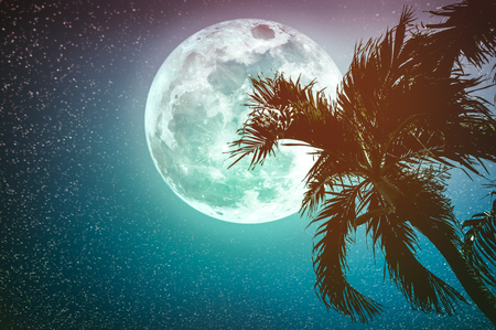 Supermoon with many stars. Beautiful night landscape of sky with full moon behind betel palm tree, outdoor in gloaming time. Serenity nature background. Cross process. The moon taken with my camera.