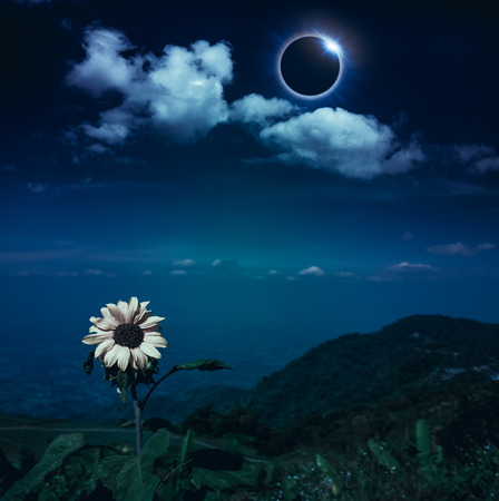 Scientific natural phenomenon. The Moon covering the Sun. Total solar eclipse with diamond ring effect above mountain range and sunflower. Beautiful nature and serenity landscape.
