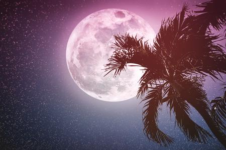 Hermoso Paisaje Nocturno De Cielo Azul Y Luna Llena Con Brillante Luz De  Luna Sobre El árbol De Pino, Al Aire Libre En El Tiempo De Gloaming. Fondo  De La Naturaleza De