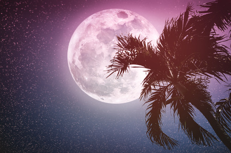 Supermoon with many stars. Beautiful night landscape of sky with full moon behind coconut tree, outdoor in gloaming time. Serenity nature background. Vintage tone. The moon taken with my camera.