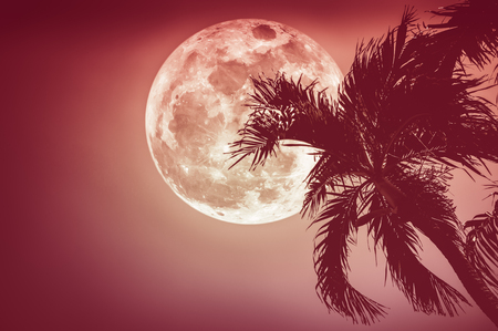 Supermoon. Beautiful night landscape of red sky with full moon behind betel palm tree, outdoor in gloaming time. Serenity nature background. The moon taken with my camera.