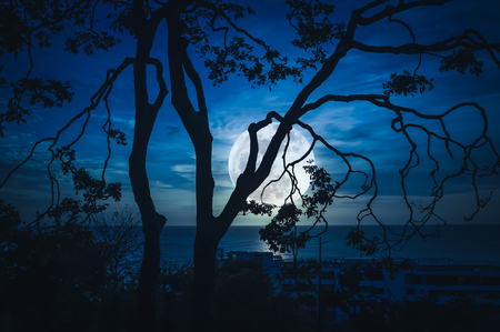 Silhouette branches of trees against blue sky and bright full moon above seascape. Beautiful landscape and serenity natural background. Outdoors at nighttime. The moon taken with my own camera.