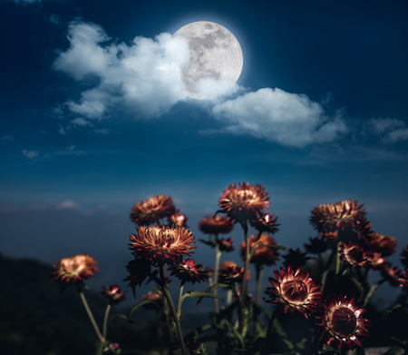 Beautiful night landscape of dark blue sky with full moon behind clouds above dry straw flowers. Serenity nature background.  The moon taken with my own camera. Stock Photo