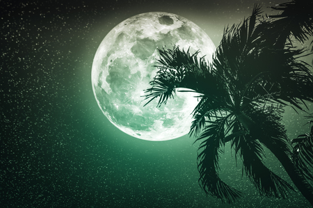 Supermoon with many stars. Beautiful night landscape of emerald sky with full moon behind betel palm tree, outdoor in gloaming time. Serenity nature background. The moon taken with my camera.