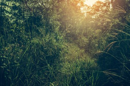 Forest spring landscape with grass on the foreground and sunlight shining through the forest trees. Stock Photo