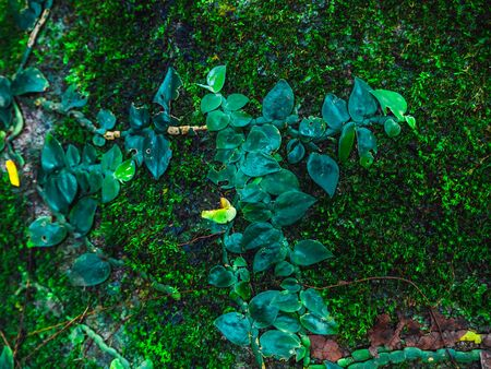 Close up. Beautiful green moss and plant covered on the ground in the forest. Stock Photo