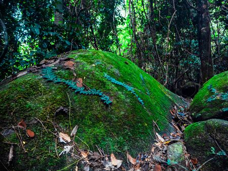 Beautiful green moss and leaves covered on the rock in the forest.