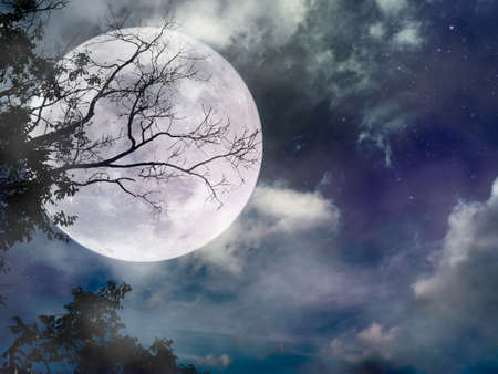 Landscape of dark night sky with many stars. Beautiful super moon with bright moonlight behind silhouette of dead tree in forest. Serenity nature background.