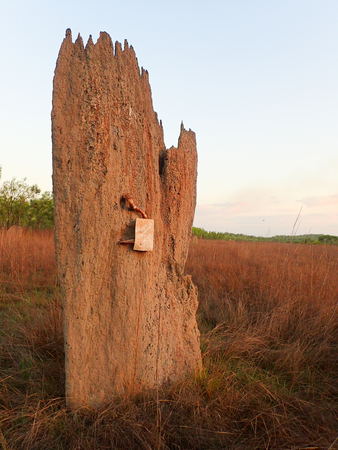 termite: Termite mound in outback Australia