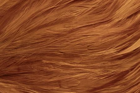 natural cock: Cock feather natural texture