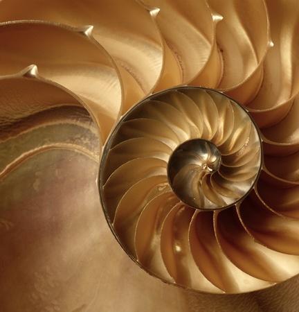 Natural texture of shell  Nautilus swirl background  Stock Photo