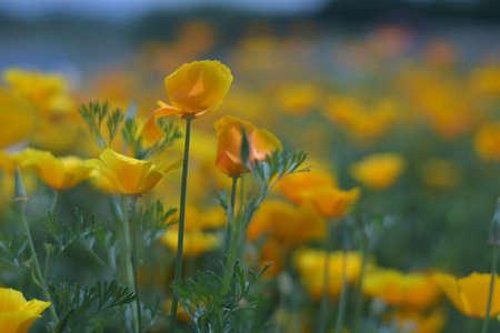 Flowers Banco de Imagens