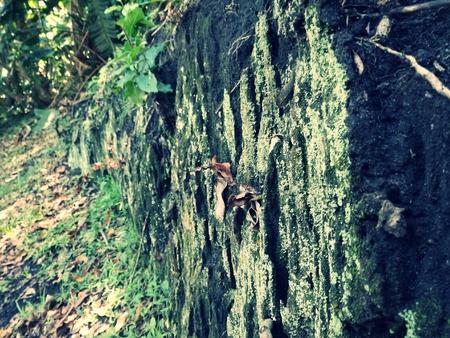 Mossy background