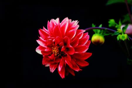neutral: close up flower