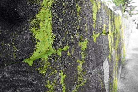 mossy: Mossy wall