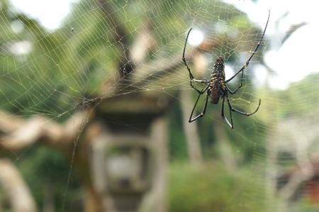 red: Tela de ara�a