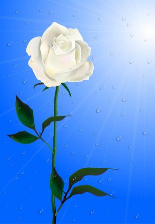Morning Rose. Flower in the rain. Stock Vector - 8626503