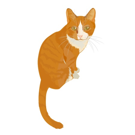Ginger cat. Home favorite. Cat with character. Illustration