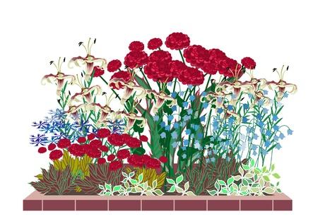 Jardin de fleurs de roses et de lys. Développement des plates-bandes de roses. Vecteurs
