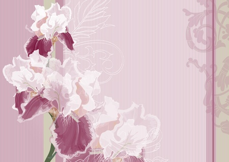 Holiday greeting card or invitation to the wedding. Net background for the text of love. Irises on a pink background.