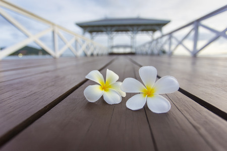 Plumeria on Wooden pier at Koh Si Chang island, Thailand