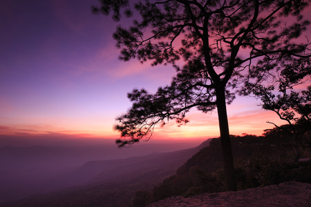 Sunset at cliff, with silhouettes of tree at (Pha Mak Duk) Phukradung National Park, Thailand  (long exposure) Stock Photo