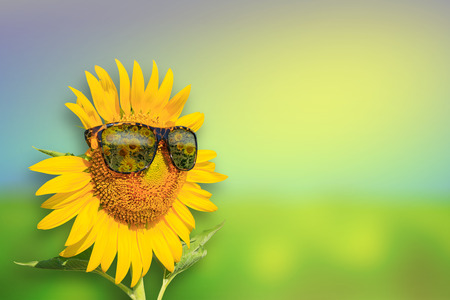 Sunflowers glasses on background : Summer Time