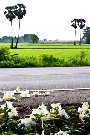 sugar land: Scenic roadside land rice with sugar palm Stock Photo