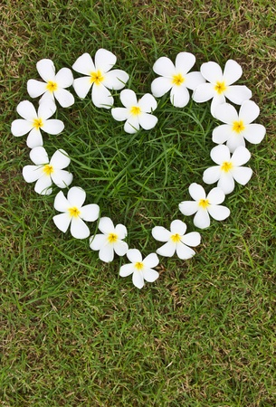 Lan Thom white heart-shaped flowers on the grass. photo