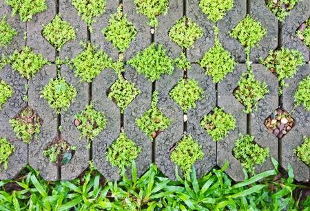 Fern Moss in the corner bricks. To make the pavement. photo
