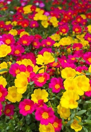 sold small: Molti fiori, piccoli fiori venduti mercato.